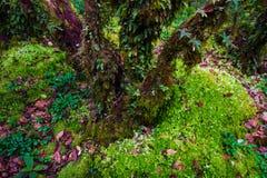 Bella foresta pluviale al sentiero didattico del Ka del ANG nel parco di nazione del inthanon di doi, Tailandia immagini stock libere da diritti