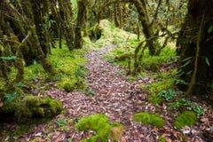 Bella foresta pluviale al sentiero didattico del Ka del ANG nel parco di nazione del inthanon di doi, Tailandia immagine stock