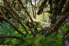 Bella foresta pluviale al sentiero didattico del Ka del ANG nel parco di nazione del inthanon di doi, Tailandia fotografia stock