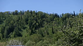 Bella foresta verde archivi video
