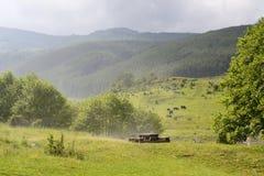 Bella foresta verde dopo la grandinata Immagine Stock