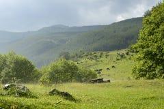 Bella foresta verde dopo la grandinata Immagini Stock