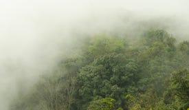 Bella foresta verde fotografia stock