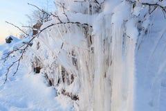Bella formazione di ghiaccio del ghiacciolo sul piccolo albero Immagini Stock