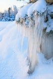 Bella formazione di ghiaccio del ghiacciolo sul piccolo albero Fotografia Stock
