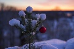 Bella foto all'aperto della palla rossa della decorazione di natale in piccolo albero nevoso Fotografie Stock Libere da Diritti