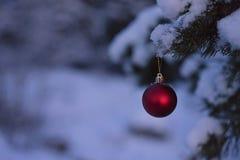 Bella foto all'aperto della palla rossa della decorazione di natale in piccolo albero nevoso Fotografia Stock Libera da Diritti