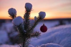 Bella foto all'aperto della palla rossa della decorazione di natale in piccolo albero nevoso Immagine Stock Libera da Diritti