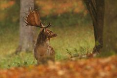 Bella foto animale La natura selvaggia della repubblica Ceca Immagine Stock