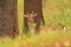 Bella foto animale La natura selvaggia della repubblica Ceca Immagine Stock Libera da Diritti