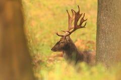 Bella foto animale La natura selvaggia della repubblica Ceca Immagini Stock