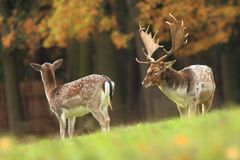 Bella foto animale La natura selvaggia della repubblica Ceca Fotografie Stock Libere da Diritti