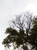 bella foto naturalistica di arti dell'albero della Sri Lanka Fotografia Stock