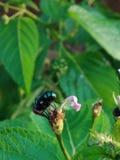 Bella fotografia del fiore immagini stock libere da diritti