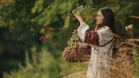 Bella giovane donna in vestiti tradizionali del ukrainain che selezionano le bacche rosa del guelder nella foresta archivi video