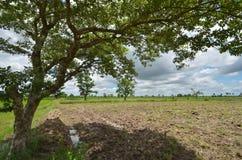 Bella grande preparazione del suolo e dell'albero a coltivare preparazione Fotografia Stock