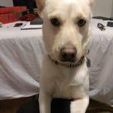 Bella hund Arkivfoto