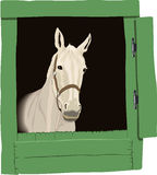 Bella illustrazione del cavallo, colore Fotografia Stock Libera da Diritti