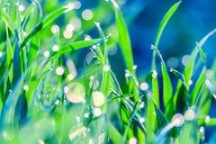 Bella immagine artistica di erba verde con la mattina in anticipo della molla delle goccioline di acqua della rugiada alla luce s fotografie stock libere da diritti