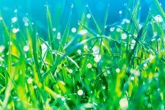 Bella immagine artistica di erba verde con la mattina in anticipo della molla delle goccioline di acqua della rugiada alla luce s immagini stock