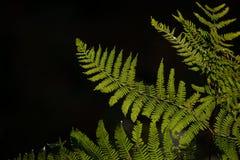 Bella immagine del paesaggio del dettaglio della felce in foresta accesa sole AG immagine stock