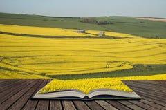 Bella immagine del paesaggio del raccolto maturo del canola del seme di ravizzone in primavera Fotografie Stock Libere da Diritti