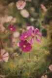 Bella immagine del prato dei fiori selvaggi di estate con l'annata fotografie stock