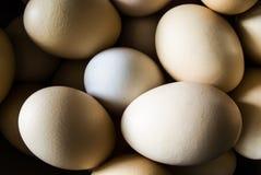 Bella immagine delle uova Fotografie Stock