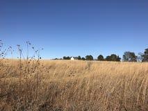 Bella immagine di inverno delle erbe gialle Fotografie Stock Libere da Diritti