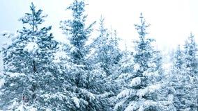 Bella immagine di inverno landscape archivi video