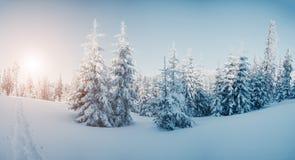 Bella immagine di inverno landscape Immagine Stock