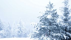 Bella immagine di inverno landscape video d archivio