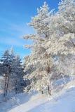 Bella immagine di inverno landscape Fotografie Stock