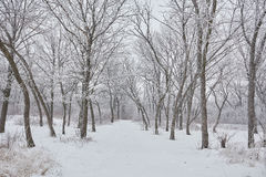 Bella immagine di inverno landscape Fotografia Stock