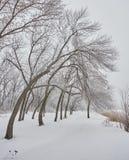 Bella immagine di inverno landscape Immagini Stock Libere da Diritti