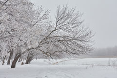 Bella immagine di inverno landscape Immagine Stock Libera da Diritti