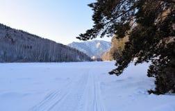 Bella immagine di inverno landscape Montagne e betulle siberia Khakassia immagine stock