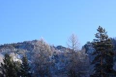 Bella immagine di inverno landscape Montagne e betulle siberia Khakassia fotografia stock libera da diritti