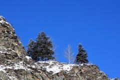 Bella immagine di inverno landscape Montagne e betulle siberia Khakassia immagini stock libere da diritti