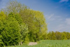 Bella immagine di un giorno soleggiato con un sentiero per pedoni e gli alberi verdi abbondanti fotografie stock