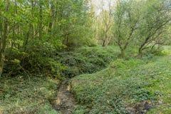 Bella immagine di una corrente nella foresta un giorno soleggiato di autunno fotografie stock