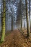 Bella immagine di una traccia nella foresta coperta in foglie asciutte fra i pini alti immagini stock libere da diritti