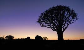 Bella incandescenza africana di notte di tramonto con l'albero profilato del fremito Immagine Stock