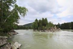 Bella isola in mezzo ad un fiume Katun della montagna Fotografia Stock
