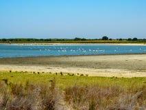 Bella laguna blu in pieno dei fenicotteri fotografia stock libera da diritti
