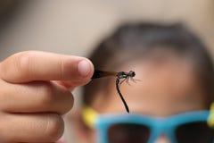 Bella libellula nella mano Fotografia Stock