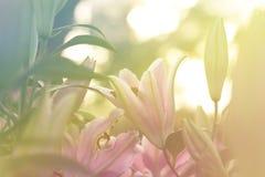 Bella lilly fioritura nel giardino di primavera Immagini Stock Libere da Diritti