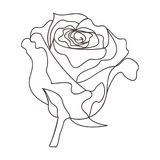 Bella linea continua minima vettore di progettazione della rosa illustrazione di stock