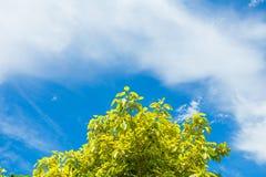 Bella luce solare attraverso gli alberi con gli azzurri Immagini Stock Libere da Diritti