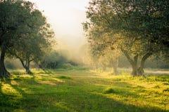 Bella luce solare vaga della foschia della foresta fotografie stock libere da diritti